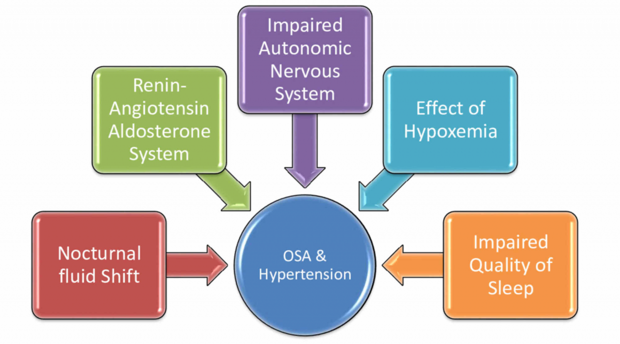 Cureus   Obstructive Sleep Apnea and Hypertension: A Review of the  Relationship and Pathogenic Association