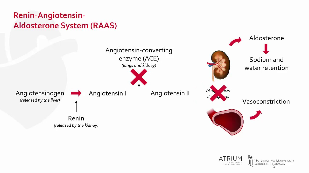 ACE Inhibitors: Mechanism of Action, Side Effects and Precautions