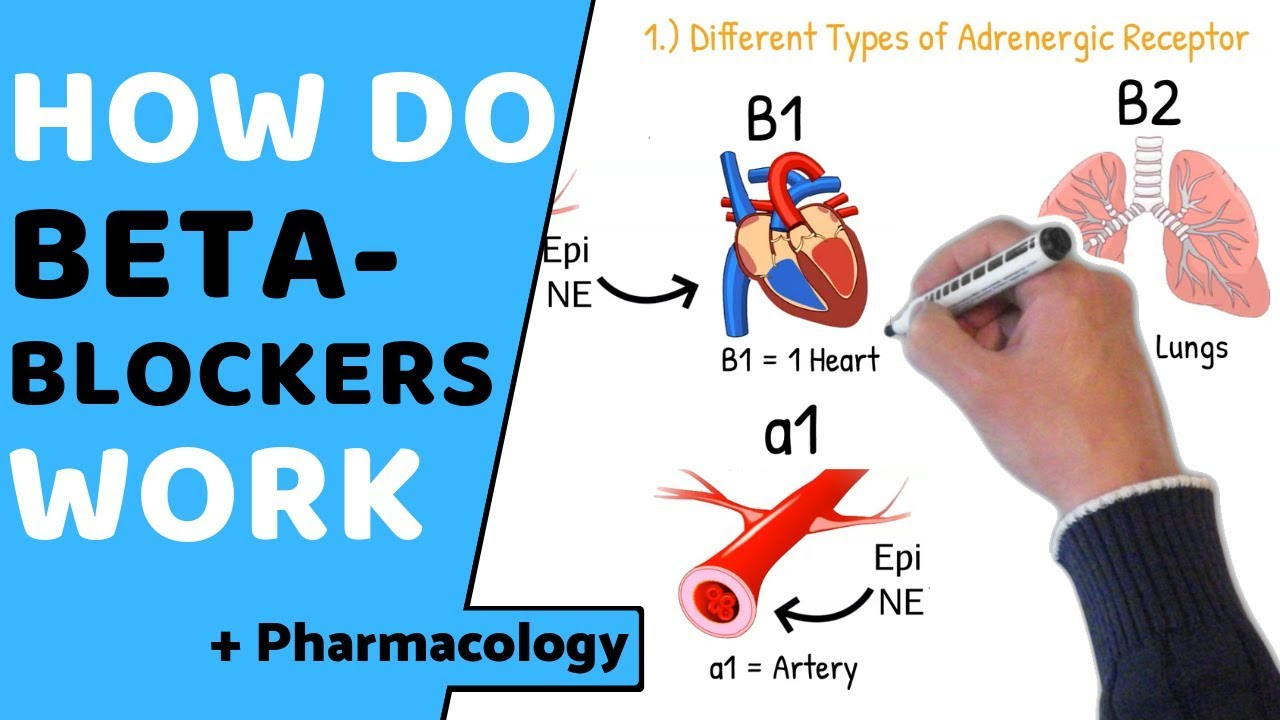 Difference Between Alpha and Beta Blockers   Difference Between