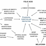 Nutrients | Free Full-Text | Nutraceuticals and Hypertensive Disorders in  Pregnancy: The Available Clinical Evidence | HTML