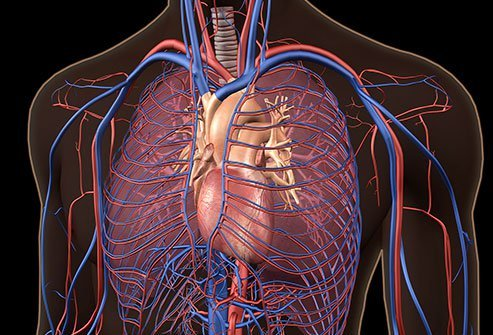 What Is the Main Cause of Hypertension