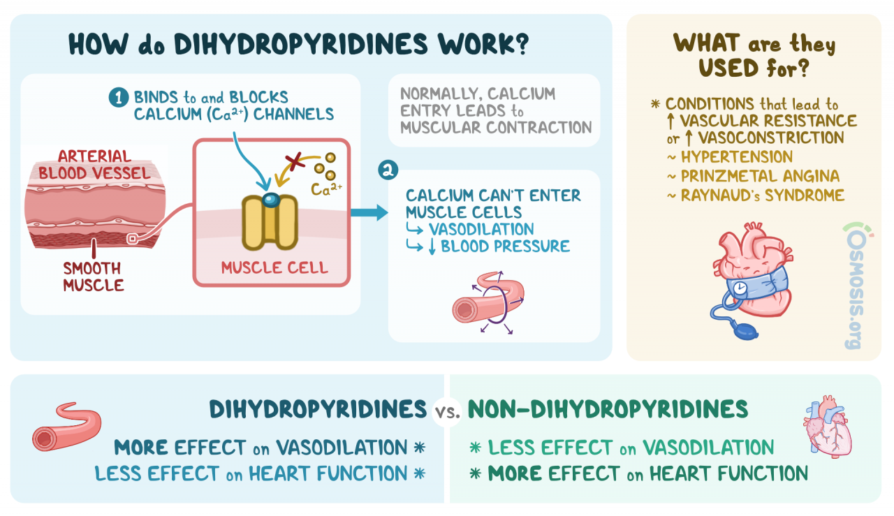 Dihydropyridines: What Are They, Mechanism of Action, Indications, Side  Effects, and More   Osmosis