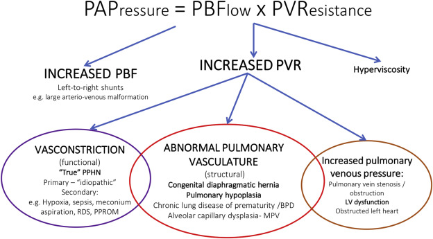 Pulmonary hypertension in newborn infants: pathophysiology, clinical  assessment and management - ScienceDirect
