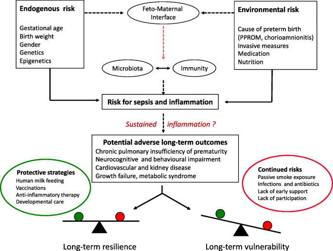 Preterm birth and sustained inflammation: consequences for the neonate    SpringerLink