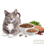 Cat food: How to help cat food addicted cats change their diet? (Help cats  who never eat canned food and meat to quit
