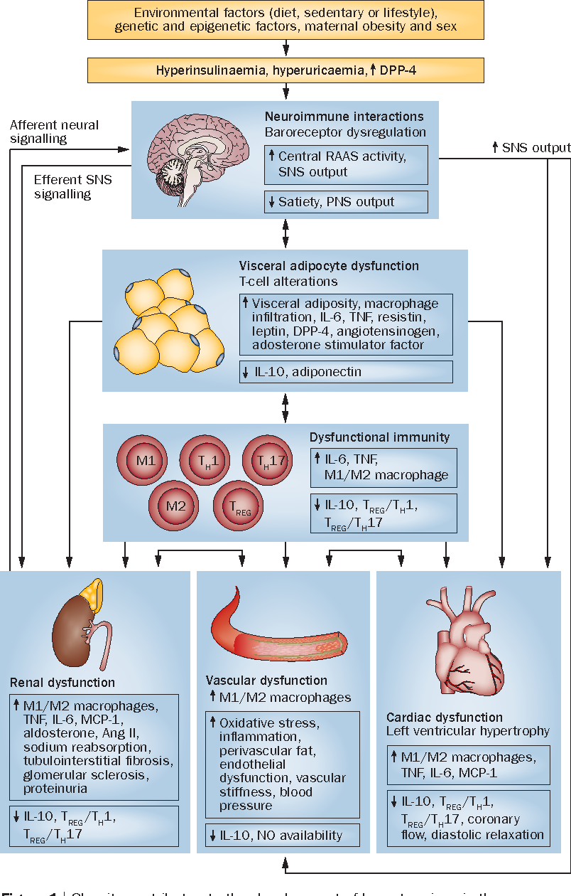 Figure 1 from The pathophysiology of hypertension in patients with obesity  | Semantic Scholar