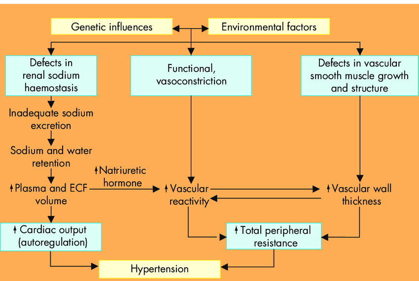 The pathophysiology of primary hypertension. A hypothetical scheme for... |  Download Scientific Diagram
