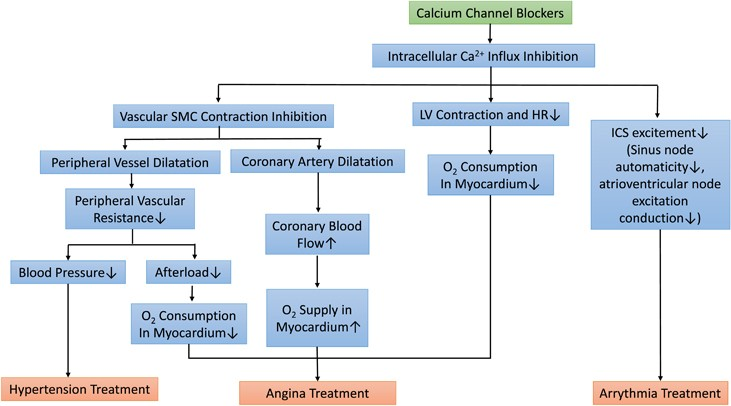 Clinical roles of calcium channel blockers in ischemic heart diseases |  Hypertension Research