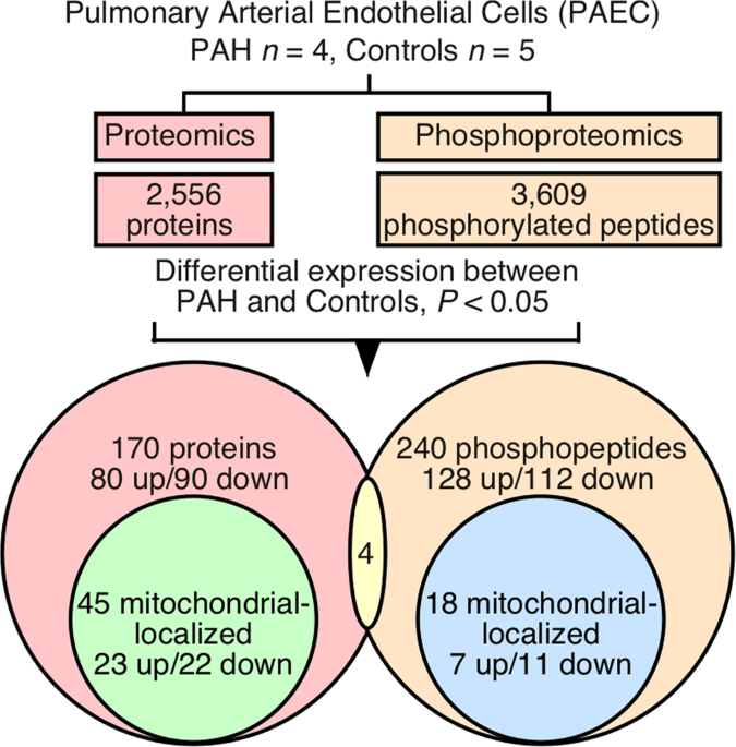 Integrative proteomics and phosphoproteomics in pulmonary arterial  hypertension | Scientific Reports