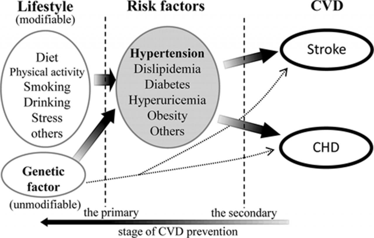 Prevention of Hypertension and Cardiovascular Diseases | Hypertension
