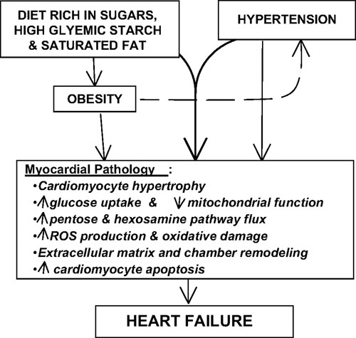 Does Junk Food Lead to Heart Failure? | Hypertension