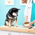 Best Diabetic Dog Food for Canine Diabetes   BeChewy