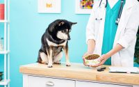 Best Diabetic Dog Food for Canine Diabetes | BeChewy