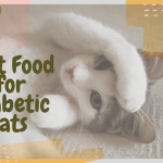 Best Food for Diabetic Cats and Everything Else You Need to Know |  OliveKnows