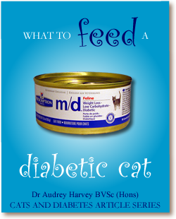 What to Feed a Diabetic Cat | Cats and Diabetes
