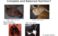 Six reasons not to feed dry cat food | Life of the Lintee Bean