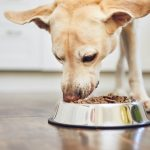 Top 5 Recommended Best Diabetic Dog Food Recipes - 2021