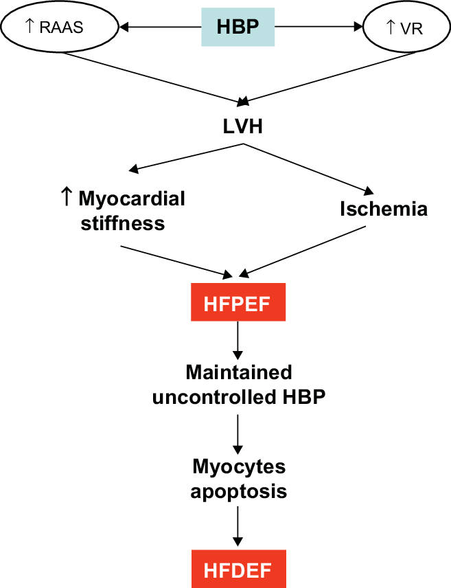 From high blood pressure to heart failure. Abbreviations: HBP, high... |  Download Scientific Diagram