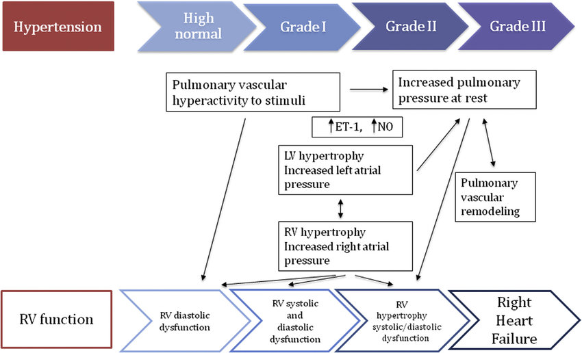 How hypertension may be a cause of right heart failure. For detailed...    Download Scientific Diagram