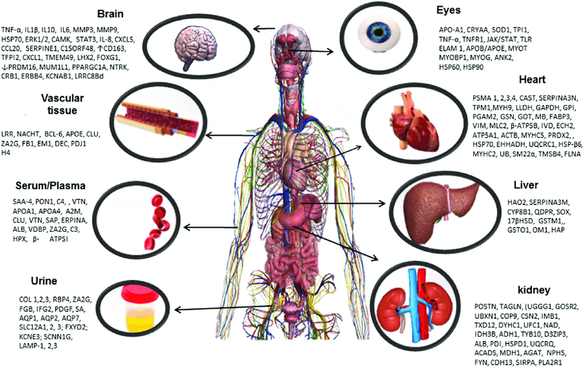 Hypertension affects various organs in the human body. Increased blood...    Download Scientific Diagram