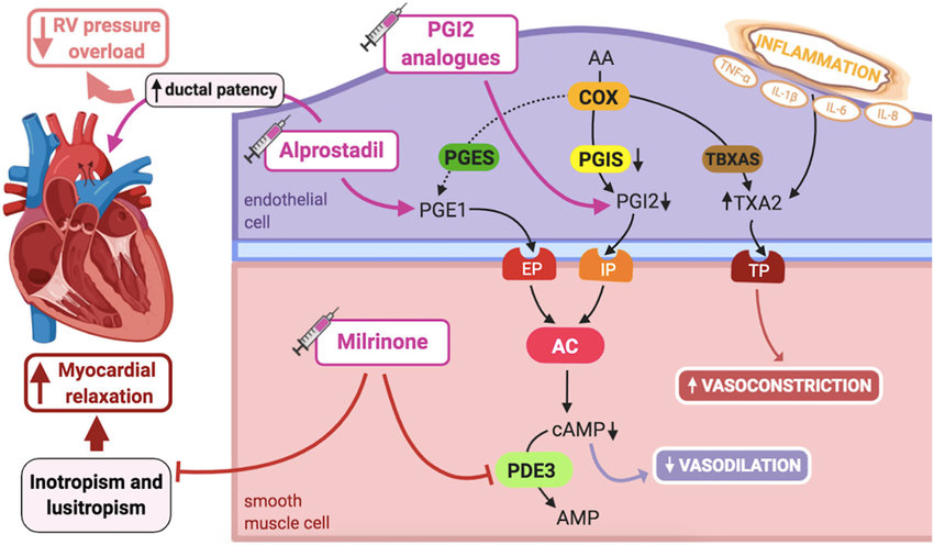 Pathogenic mechanisms of persistent pulmonary hypertension of the...    Download Scientific Diagram