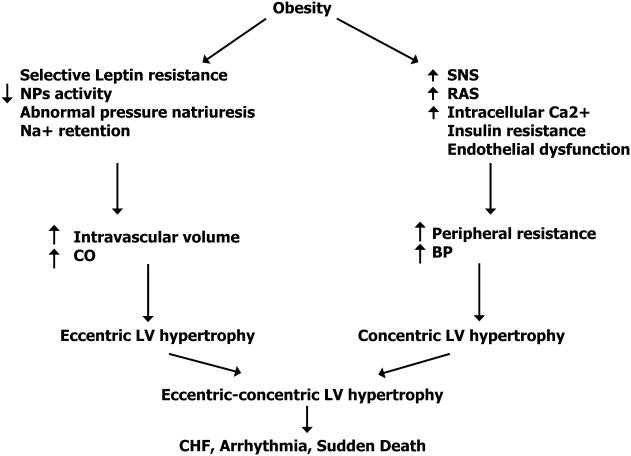 Potential pathways in which obesity can cause cardiovascular... | Download  Scientific Diagram