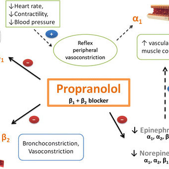 Proposed mechanism by which propranolol induces peripheral...   Download  Scientific Diagram