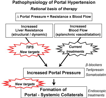 Rationale basis for the treatment of portal hypertension. While current...  | Download Scientific Diagram