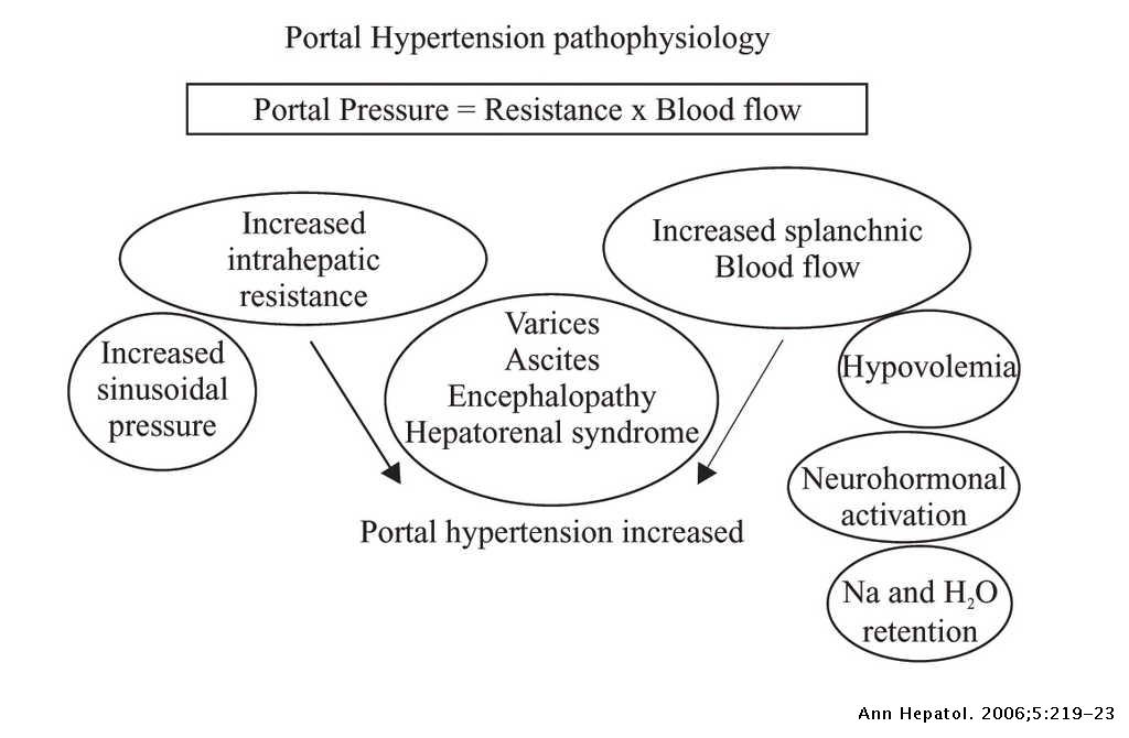 Pregnancy and portal hypertension a pathology view of physiologic changes    Annals of Hepatology
