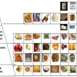 Sudanese food servings according to the diabetes food guide pyramid    Download Scientific Diagram