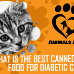 What is the Best Canned Cat Food for Diabetic Cats? [ Detailed Answer ]