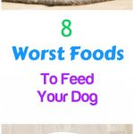 8 Worst Foods You Can Feed Your Dog   Petslady.com