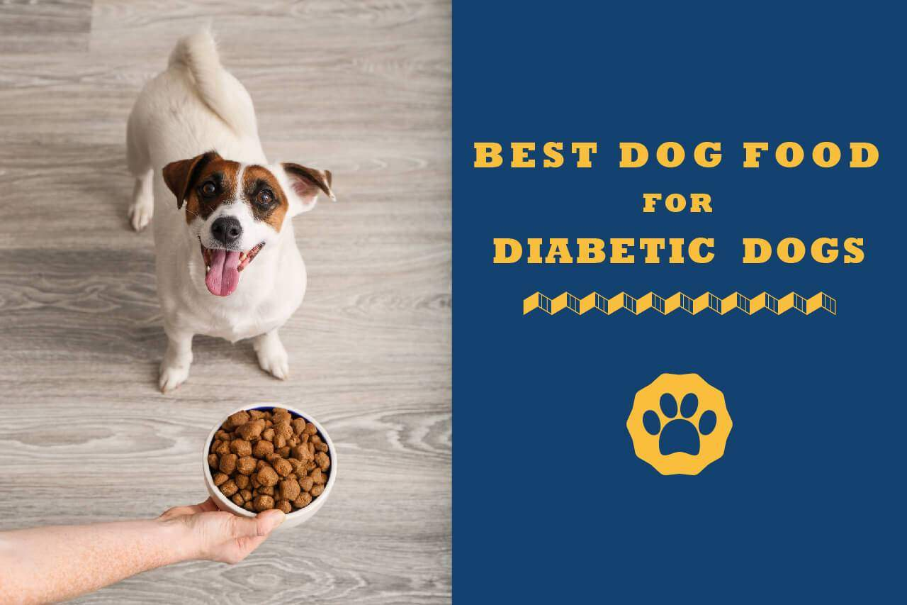 Best Dog Food For Diabetic Dogs In 2021: Reviews & Buyer Guide