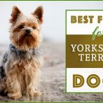 10 Healthiest & Best Dog Food for Yorkies in 2021 Revealed!