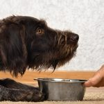 Diabetic Dog Food – What's the Best Choice for Your Pet?
