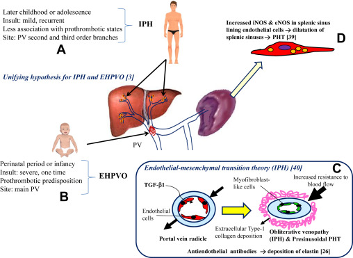 References in Noncirrhotic Portal Hypertension - Clinics in Liver Disease