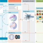 Precision nutrition for prevention and management of type 2 diabetes - The  Lancet Diabetes & Endocrinology