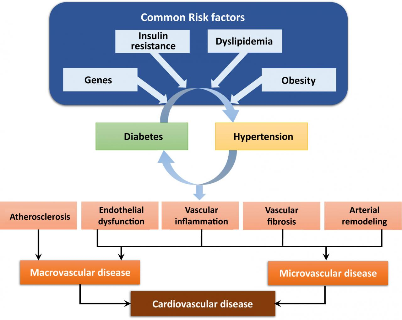 Diabetes, Hypertension, and Cardiovascular Disease: Clinical Insights and  Vascular Mechanisms - Canadian Journal of Cardiology