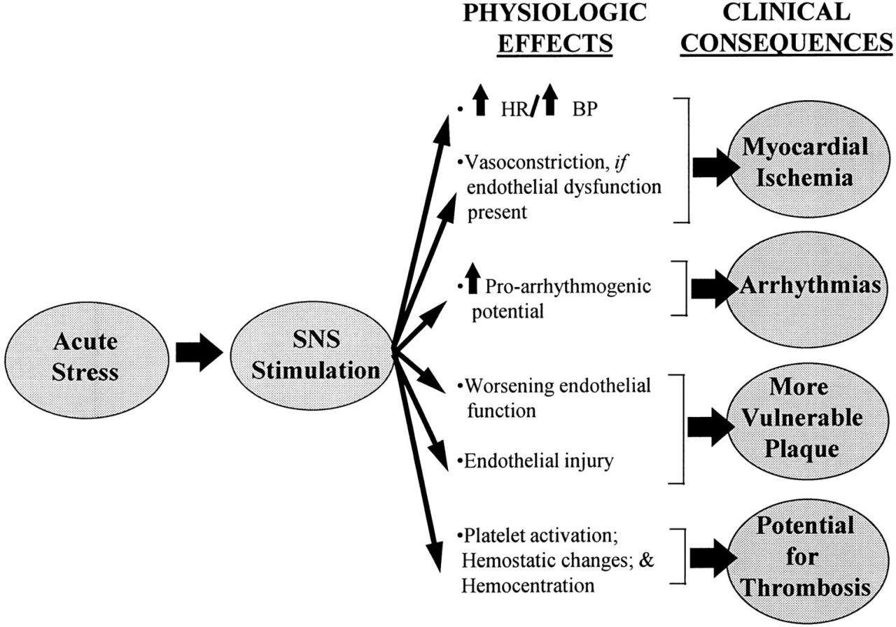Impact of Psychological Factors on the Pathogenesis of Cardiovascular  Disease and Implications for Therapy | Circulation
