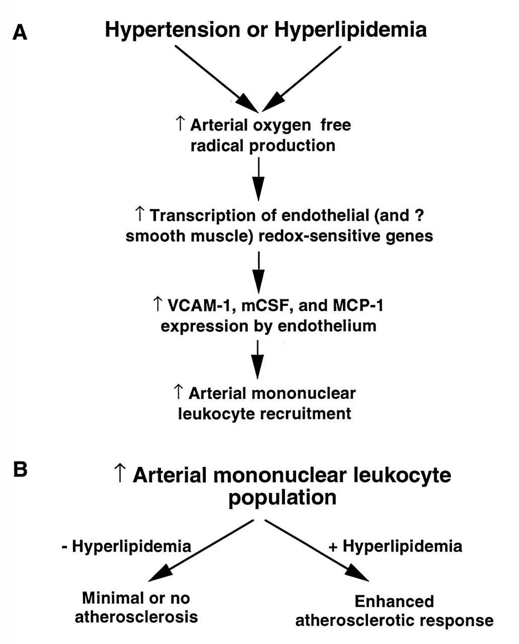 Hypertension and the Pathogenesis of Atherosclerosis   Hypertension