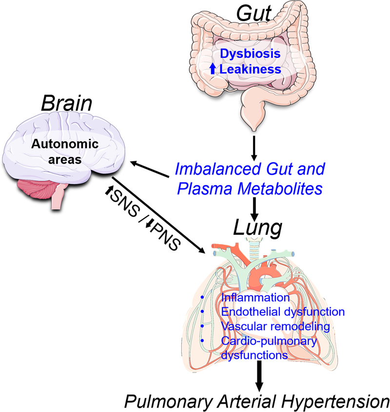 Altered Gut Microbiome Profile in Patients With Pulmonary Arterial  Hypertension | Hypertension