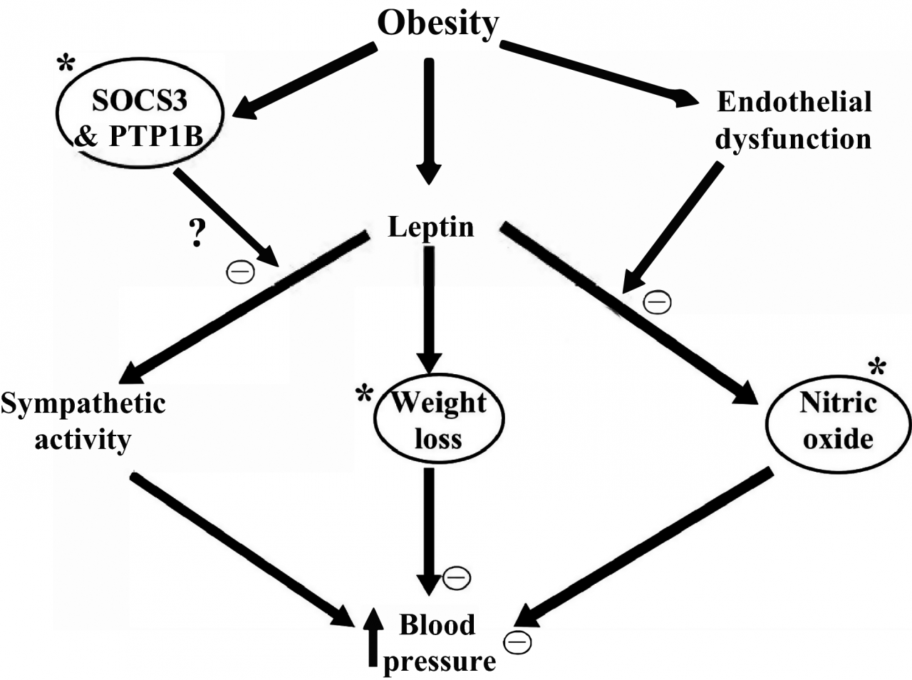 Obesity‐Induced Hypertension: Heavy on the Accelerator | Journal of the  American Heart Association