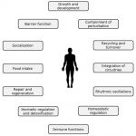 Nutrients   Free Full-Text   Nutrition to Optimise Human Health—How to  Obtain Physiological Substantiation?   HTML