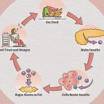 Insulin Resistance: Causes, Symptoms, Diagnosis, and Consequences    Everyday Health