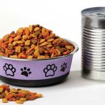 Canned or dry food: What's better for cats?